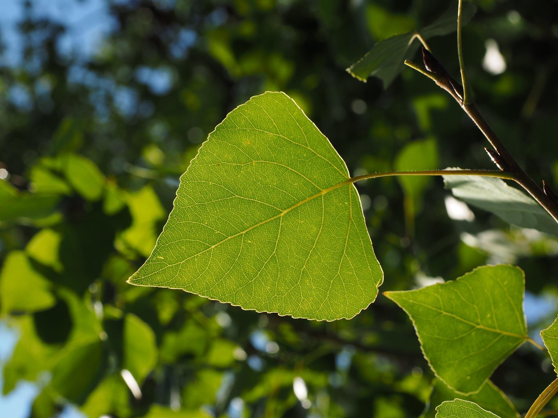 leaf-671664_1920